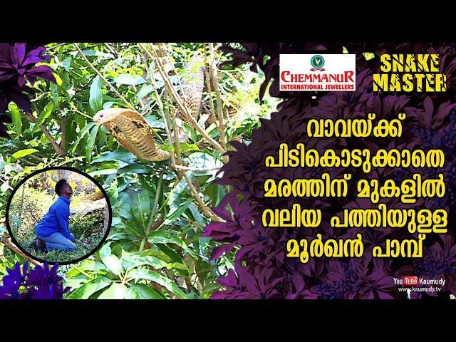 Broad-hooded snake on tree eludes Vava Suresh | Snakemaster EP 429 | Kaumudy TV