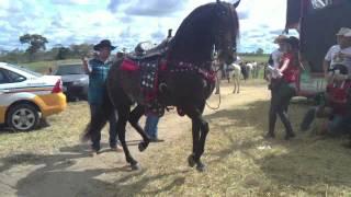 Cavalo marchando