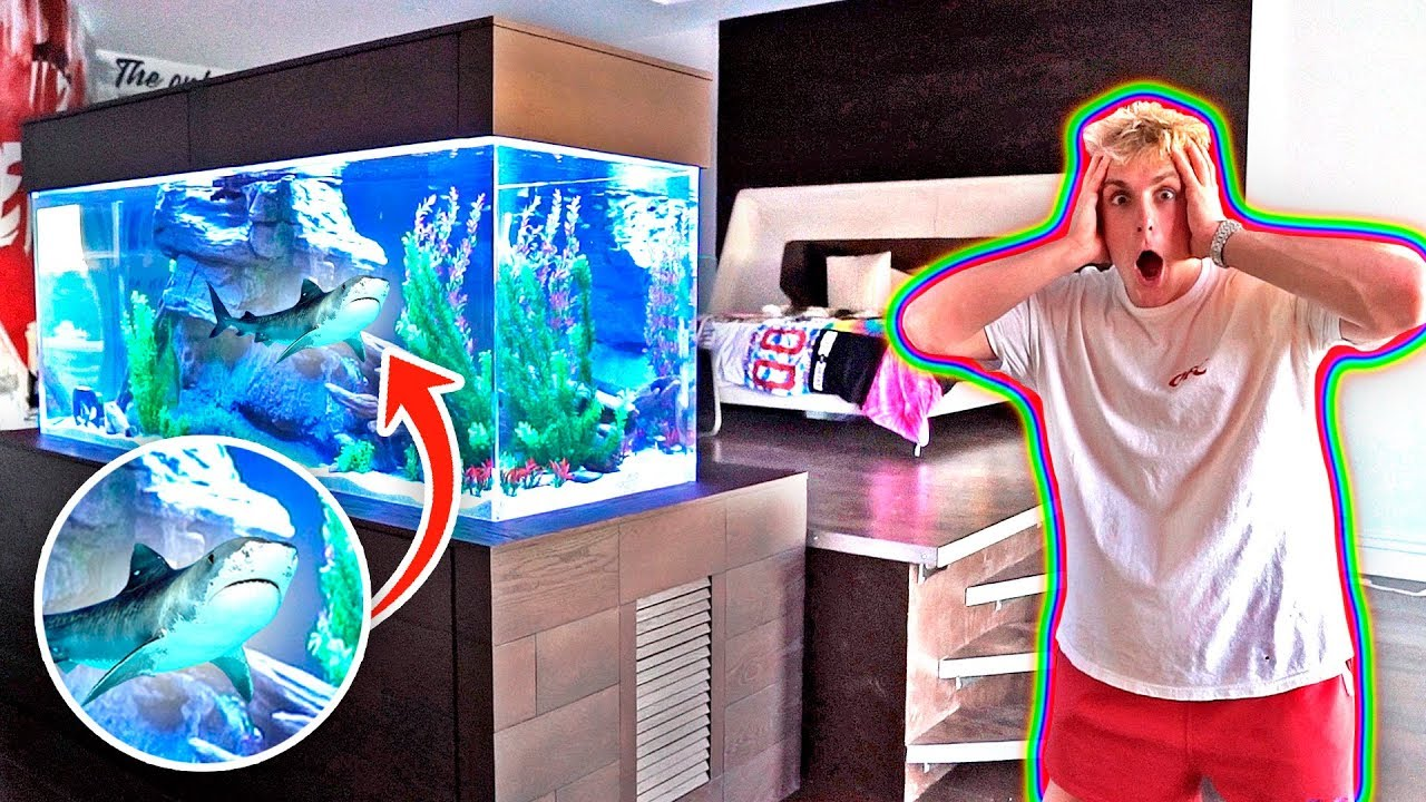 my new bedroom shark tank 500 gallons youtube