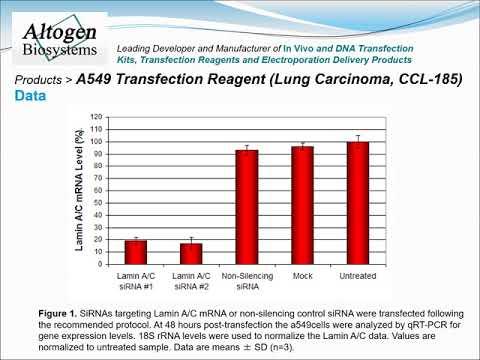 altogen-biosystems-a549-transfection-reagent