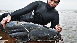 НЫРНУЛ ПОД ЛЁД ОГРОМНЫЙ СОМ РАЗМЕРОМ С ЧЕЛОВЕКА ТРОФЕЙНЫЙ СОМ Подводная охота 2021