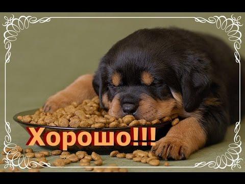 Тетка курит на улице без трусов ВКонтакте ЯндексВидео