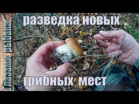 Поиск новых грибных мест. Приозерский район.