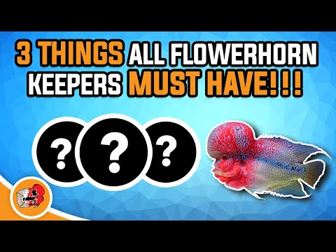 3 Thing All Flowerhorn Keepers Need - To Care For Flowerhorn Fish - Super Red Dragon Flowerhorn Care