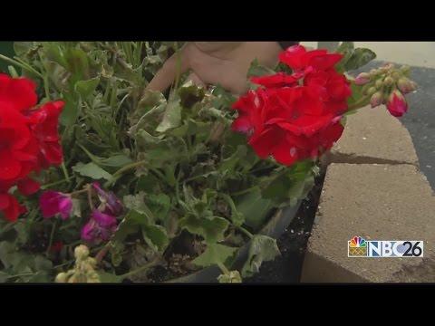 Flower shop vandalized