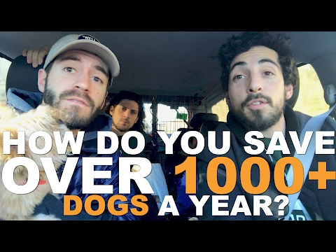 These People Rescue Over 1,000 Dogs A Year ... in Their Free Time!