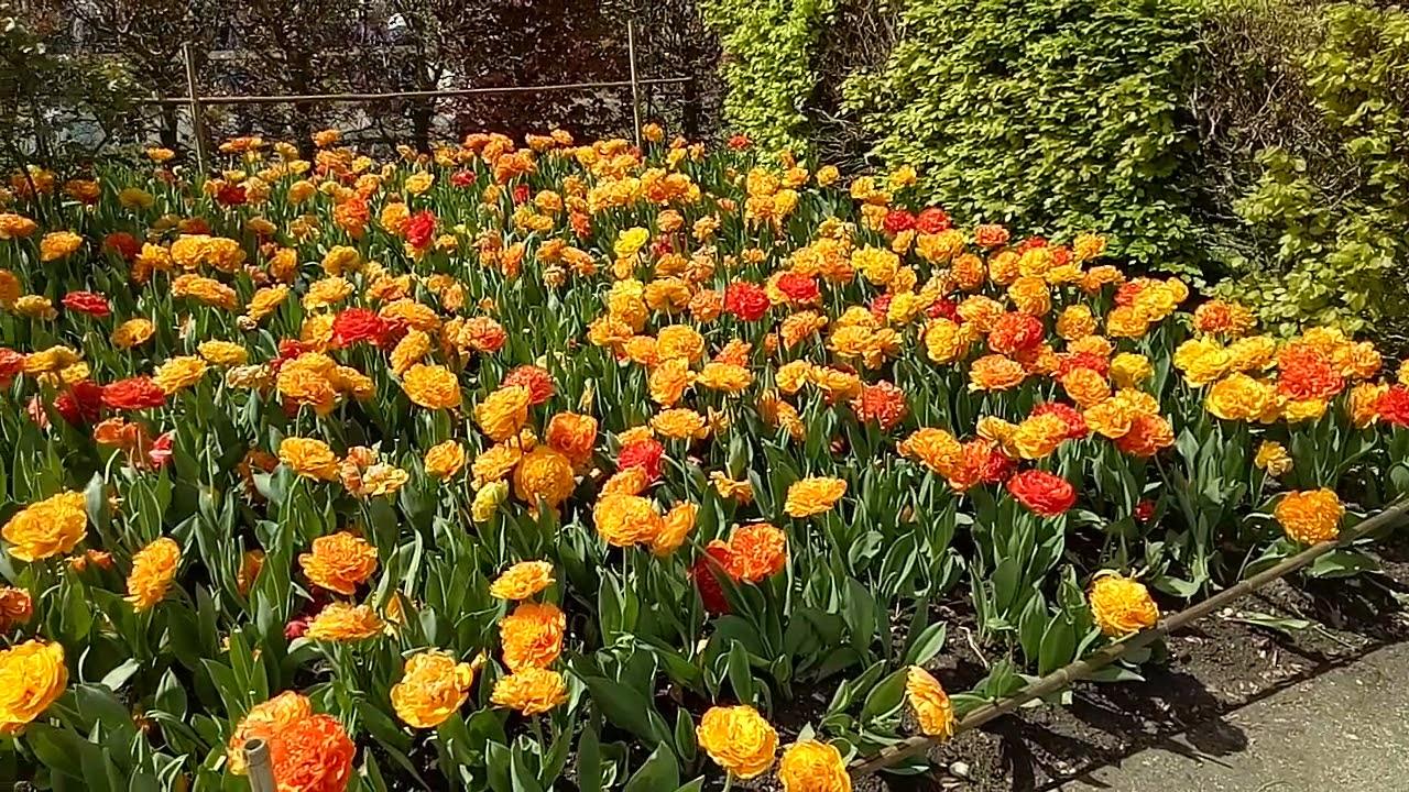 Claude Monet Garden, Giverny France - YouTube