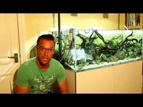 How I maintain my eaReef 1200 Nature Aquarium