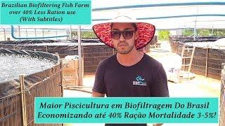 Maior Piscicultura Industrial Biofiltragem do Brasil Economia Ração