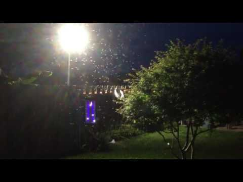Bug Zapper Show Style