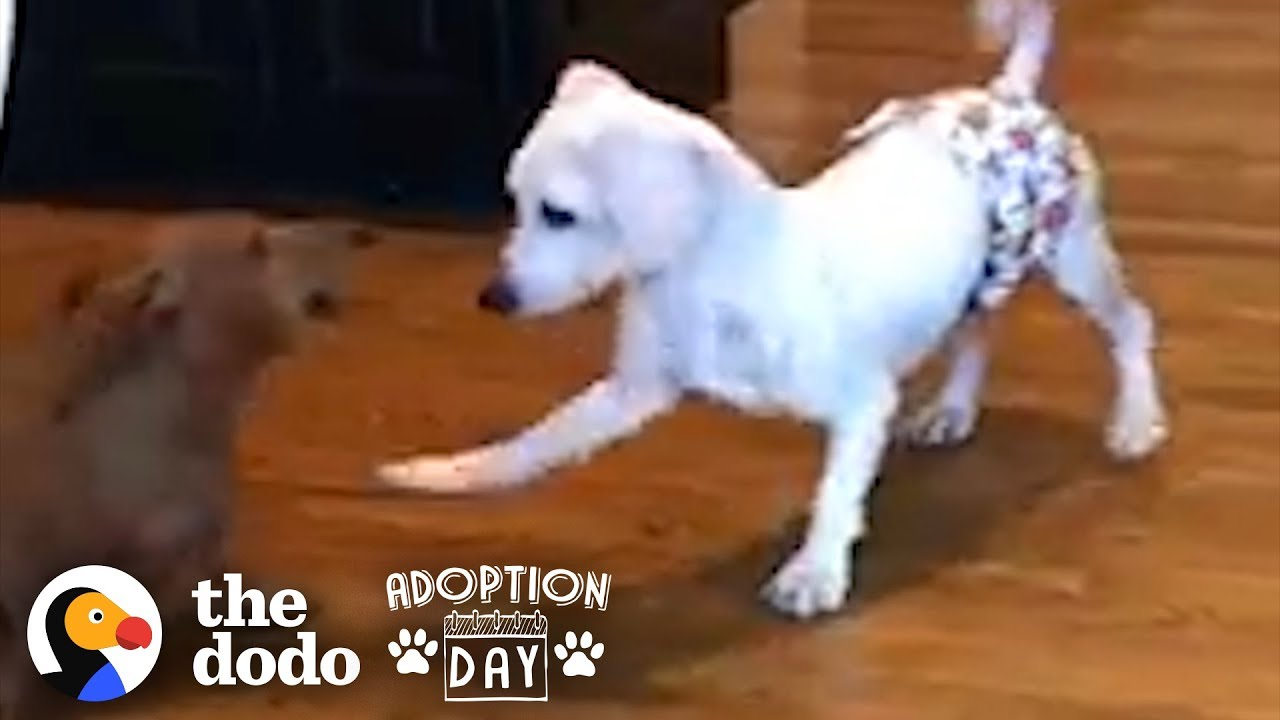 This Puppy Mill Dog Is Finally About To Get A Family | The Dodo Adoption Day
