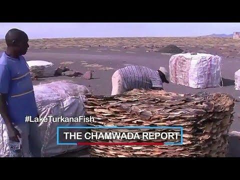 Lake Turkana fish beyond the borders