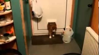 Толстый кот вернулся домой