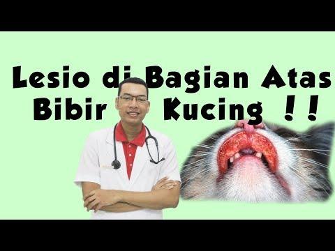WATCH IN HD!!! Lipbalm : @tiff_body lip sleeping balm Obat alergi : kenacort a cream....