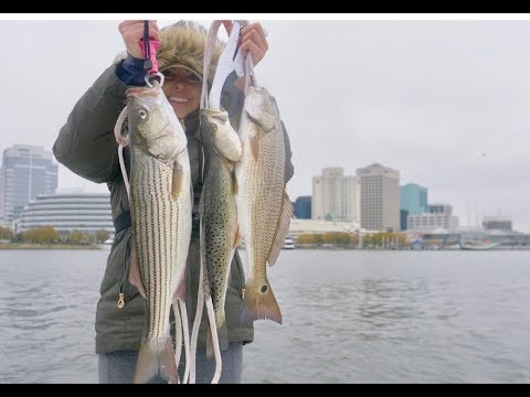 City Fishing Downtown Norfolk! Grilled Striped Bass + Redfish Catch And Cook