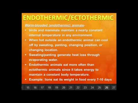 ENDOTHERMIC/ECTOTHERMIC ANIMALS