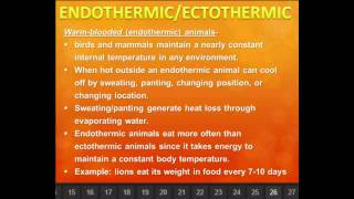 Download lagu ENDOTHERMIC ECTOTHERMIC ANIMALS MP3
