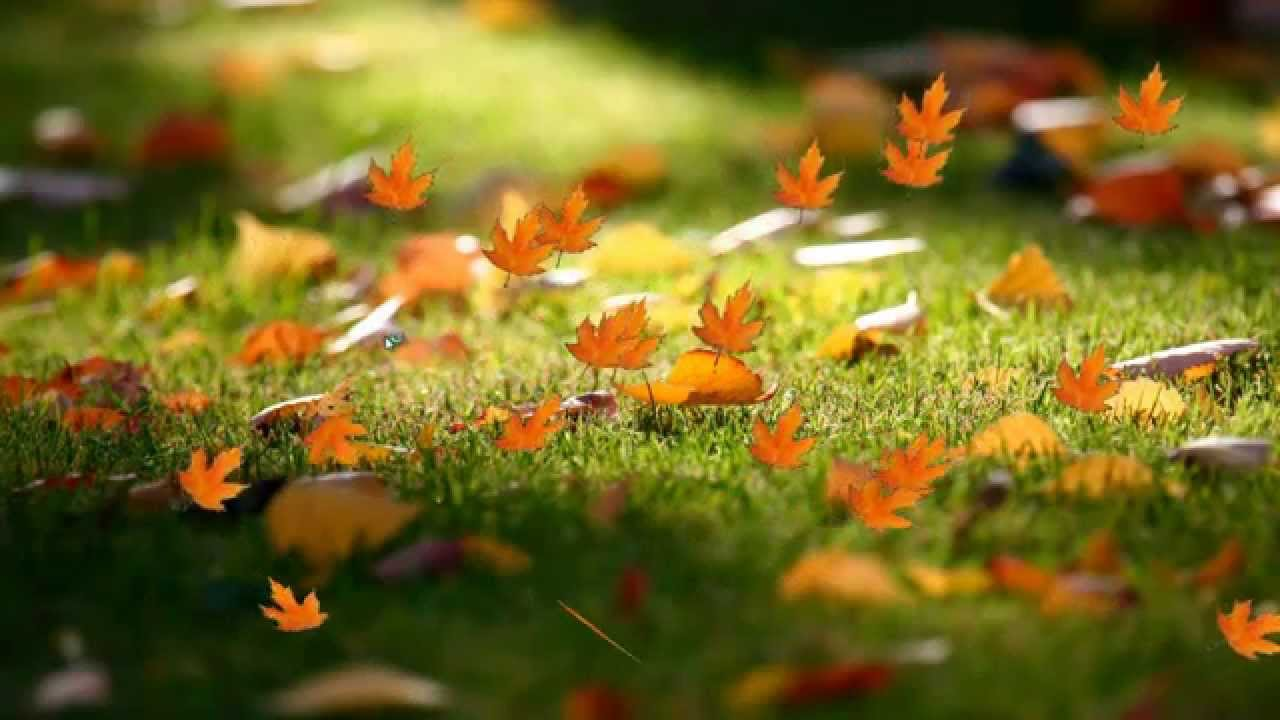 Fall Harvest Wallpaper Falling Leaves Screen Saver Youtube
