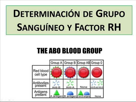 que es el grupo sanguineo y el factor rh
