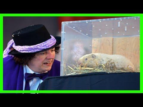 Wiarton willie, ontario's high-profile forecasting groundhog, dies at 13 | toronto star Music News