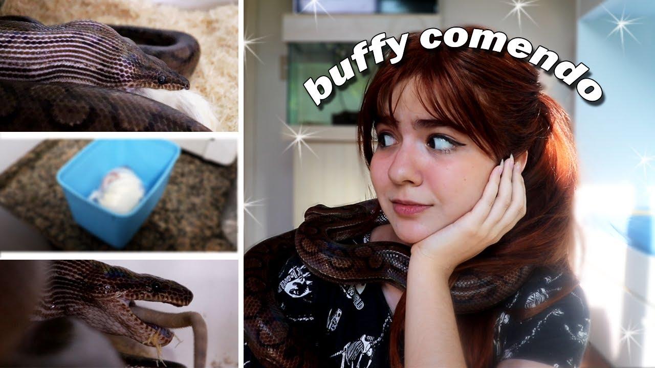 ALIMENTANDO A BUFFY!!! I Sobre a Alimentação de Serpentes