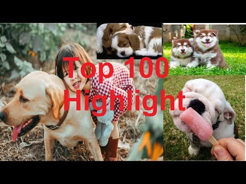 PODA DOG - Instructions Become How To Top dogs baby and cats baby are innocent | Top 100 highlight