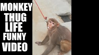 Monkey is having cigerret funny video in 2018