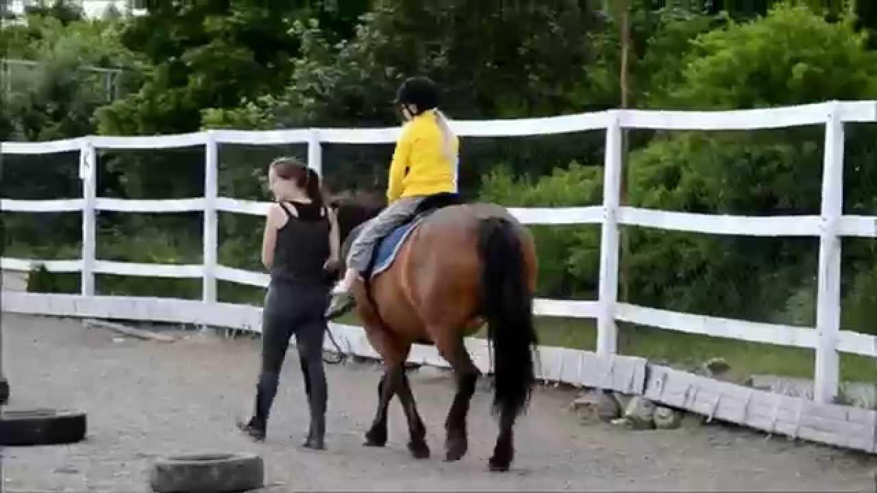 open day kelly s pony farm open day kelly s pony farm