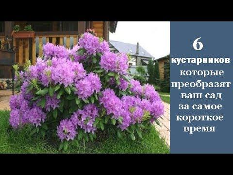 видео: 6 кустарников, которые преобразят ваш сад за самое короткое время
