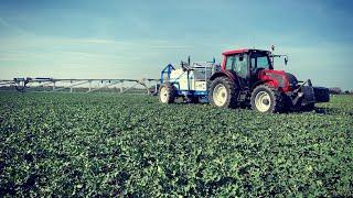 #211- Aminokwasy i Stymulatory uchronią przed mrozem i suszą ? + zwalczanie szkodników w rzepaku oz.