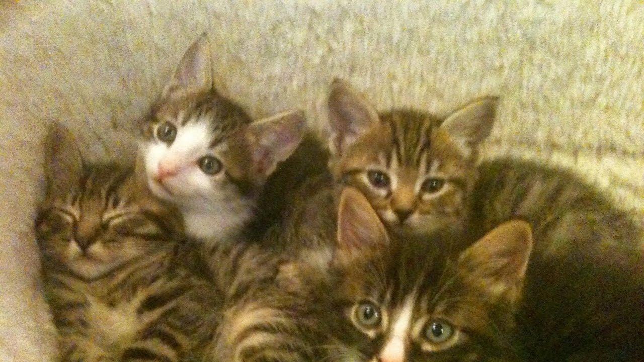 Kitten 911 Live Stream