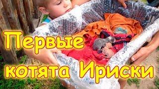Наша кошка Ириска родила котят! Операция по спасению. (08.17г.) Семья Бровченко.