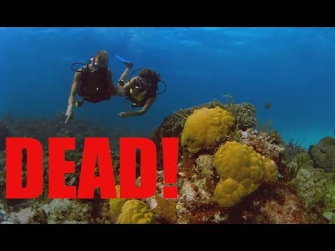 The Great Barrier Reef is almost DEAD - so get in while it's hot!