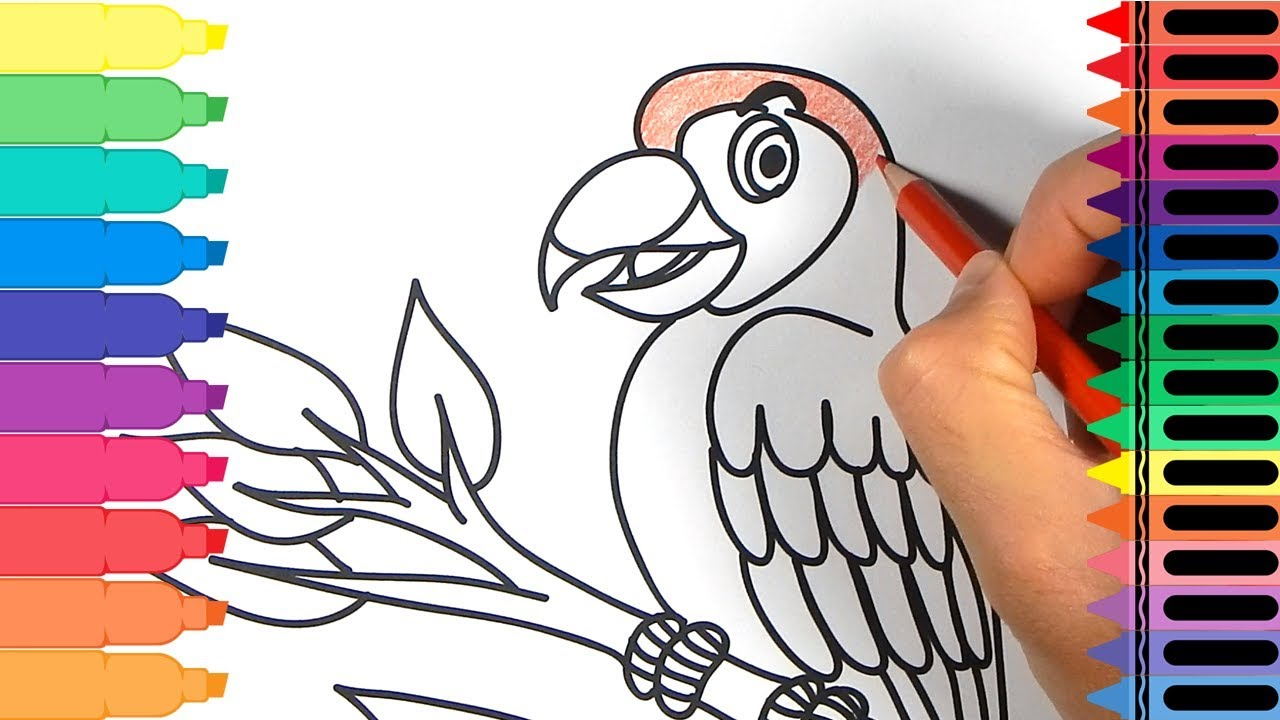 How to Draw a Parrot - Drawing a Parrot Bird - Coloring Pages ...