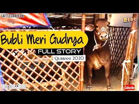 Bubli Meri Gudrya I Best Vlog I Qurbani 2020 I Karachi Waley