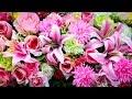Rosen & Lilien lächeln / Saint Germain kauft Blumen