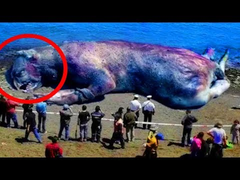 Most MYSTERIOUS Sea Monster Carcasses Ever Found!