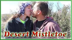 Native Plants and Animals- Desert Mistletoe