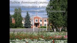 видео Чума наступает: в Крыму — новый случай АЧС