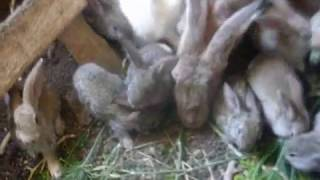 Простая профилактика кроликов от болезней