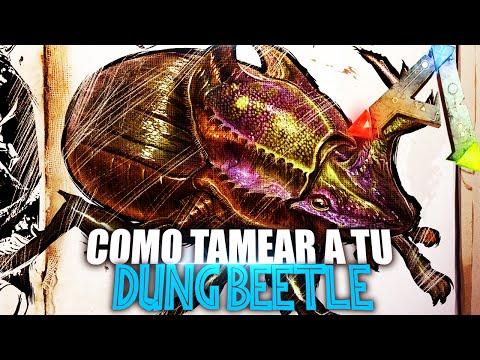 COMO TAMEAR A TU DUNG BEETLE | Guia Español | Ark: Survival Evolved