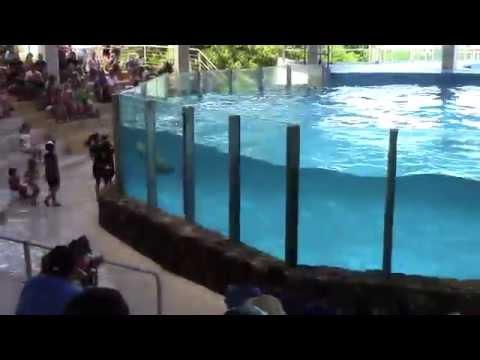 The Dolphin Show at Sea Life Park Hawaii