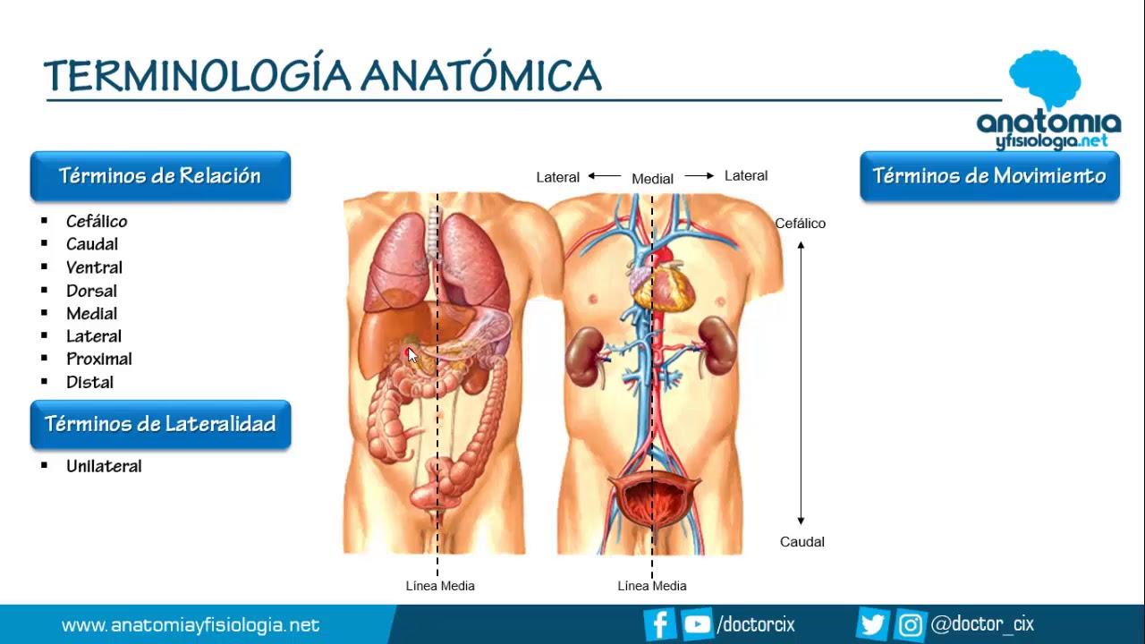 TERMINOLOGÍA ANATÓMICA || Resúmenes de Anatomía y Fisiología - YouTube