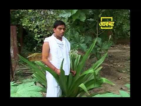 Ayurvedic use Sudarshan  (Sudarshan)