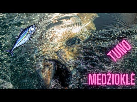 Download Tuno medžioklė Danijoje