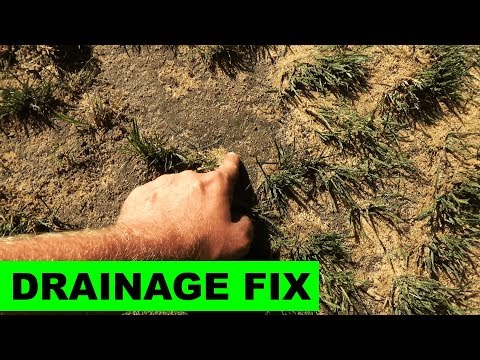 Fixing soggy lawns with sand - YouTube
