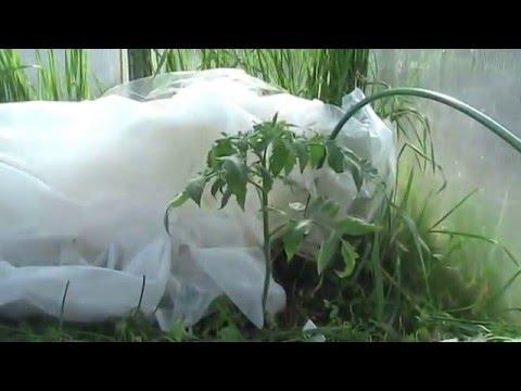 Ресторан Zеленая Горчица Оренбург отзывы, фото, цены
