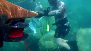 spearfishing ahmed غوص الجبيل صيد سبيطي