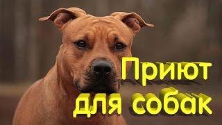 Приют для собак в Москве