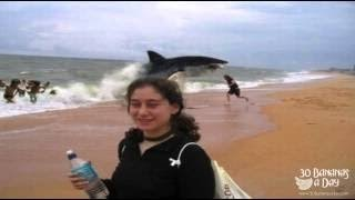 German Backpacker Shark Attack On Australian Beach  real or fake